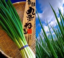 農業生産法人 こと京都株式会社 自慢の逸品