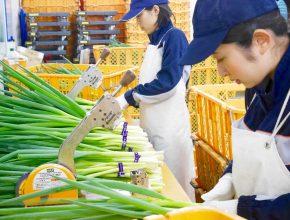 農業生産法人 こと京都株式会社 ものづくりを支える仕事