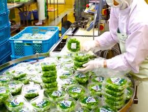 農業生産法人 こと京都株式会社 製造プロセス4