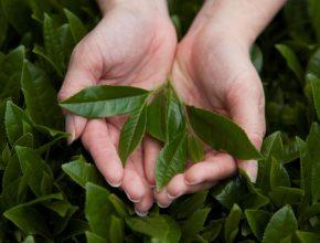 共栄製茶株式会社 ものづくりを支える仕事